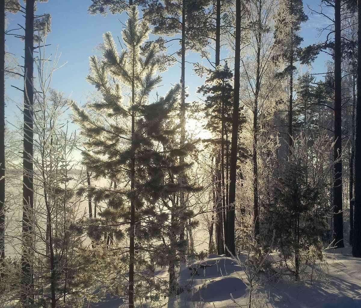 talvitaustakuva